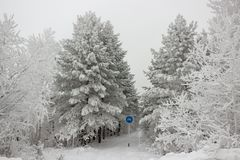 Snow-covered bicycle road in the winter forest in cloudy day stock image