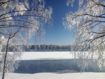 Snow-covered birch trees standing on the bank of the river Royalty Free Stock Photos