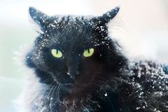 Snow covered black cat Stock Photo