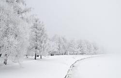 Snow-covered bomen Royalty-vrije Stock Fotografie