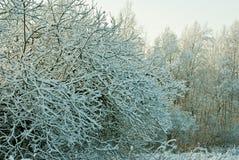 Snow-covered bomen Stock Fotografie