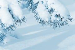 Snow-covered bomen Royalty-vrije Stock Afbeeldingen