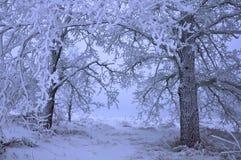 Snow-covered bomen in de heuvels van sneeuw Royalty-vrije Stock Afbeelding
