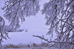Snow-covered bomen in de heuvels van sneeuw Royalty-vrije Stock Fotografie