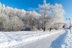 Snow-covered bomen in de stad van Moskou, Rusland royalty-vrije stock fotografie
