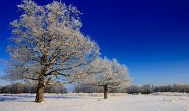 Snow-covered bomen in de winter Royalty-vrije Stock Foto