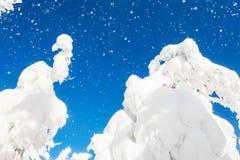 Snow-covered bomen in de winterbos Royalty-vrije Stock Afbeeldingen