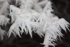Snow-covered bomen in de woestijn Royalty-vrije Stock Afbeeldingen