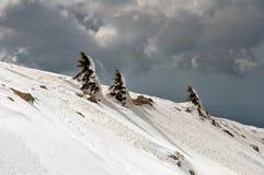 Snow-covered bomen op de helling van Onderstel Hermon. Royalty-vrije Stock Foto