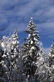 Snow-covered bomen tegen blauwe hemel Royalty-vrije Stock Foto's