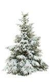 Snow-covered bont-boom op een wit Royalty-vrije Stock Afbeelding