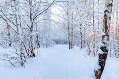 Snow-covered boom vertakt zich in het de winterbos tegen de blauwe hemel in het zonsonderganglicht stock afbeelding