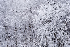 Snow-covered boomtakken Royalty-vrije Stock Afbeelding