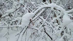 Snow-covered boomtakken die in bos, stormend de winterweer golven, aard stock footage
