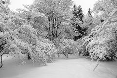 Snow-covered bos Royalty-vrije Stock Afbeeldingen