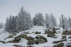 Snow-covered bos op de hellingen van de berg royalty-vrije stock foto
