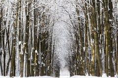Snow-covered boslandschap van de winter Stock Foto