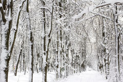 Snow-covered boslandschap van de winter Stock Afbeelding