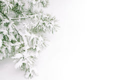 Free Snow Covered Branch Stock Images - 11711724