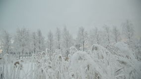 Snow covered branch. stock footage