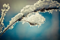 Snow covered branch against defocused background. Stock Photo