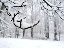 Snow covered branch background. Photo of snow covered tree branch during a snow storm that is great as a background image stock photos