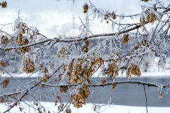 Snow-covered branch. Snow-covered branch on the banks of a river Royalty Free Stock Photography