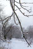 Snow-covered branch. Snow-covered branch on the banks of a river Royalty Free Stock Images