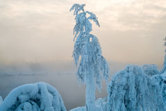 Snow-covered branch on shore of sunset lake with vapors from warm water, Karelia, Russia Stock Image
