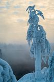 Snow-covered branch on shore of unfrozen lake with vapors from warm water, Russia Stock Images