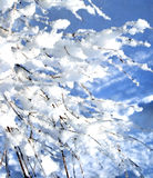Snow covered branch in winter. Sun day Stock Photography
