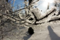 Snow covered branche with sun light.  stock images
