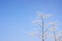Snow covered branched against a blue sky Stock Photos