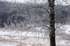Snow Covered Branches Stock Images