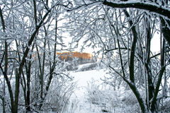 Snow covered branches Royalty Free Stock Images