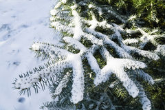 Snow-covered branches Stock Photos