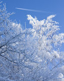Snow covered branches and airplane on the blue sky Royalty Free Stock Photo