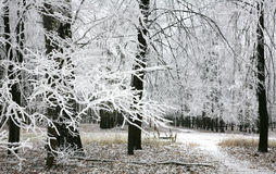 Snow covered branches in the autumn forest Royalty Free Stock Photography