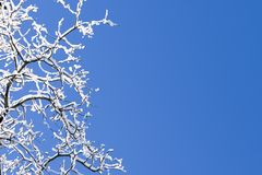 Snow Covered Branches Blue Sky. Snow Covered Branches And Crisp Clean Blue Winter Sky Royalty Free Stock Image