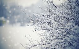 Snow-covered branches of bushes in cloudy snow weather. Snow-covered branches of bushes in the winter in cloudy snow weather Royalty Free Stock Photo