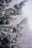 Snowy wood. Snow-covered branches of pine. beautiful Christmas landscape.the tree before Christmas Royalty Free Stock Photography