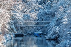 Snow covered branches and river isar in the sun royalty free stock images
