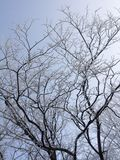 Snow-covered branches of a tree without leaves on a sky background. Snow-covered branches of a tree without leaves against the sky in a frosty winter day Stock Photo
