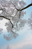 Snow-covered branches of tree on sky background royalty free stock photo