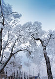Snow-covered branches of tree on sky background Stock Images