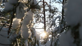 Snow-covered branches of the tree, the sun's rays stock footage