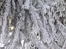 Snow covered branches of tree in the winter forest stock photos
