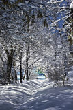 Snow-covered branches of trees. In winter Stock Photography