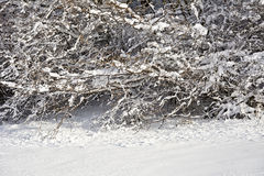 Snow covered branches of trees and bushes on a sunny day Stock Photos