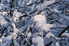 Snow covered leafless trees and shrubs in winter. Snow covered branches and trunks of trees and shrubs of deciduary forest. Joy and beauty of cold winter season Stock Photography